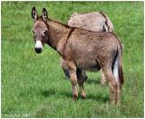 Donkey May 26 *