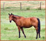 Horse May 29 *