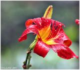 Red & Rainy June 17 *