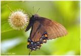Butterfly June 6 *