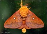 Moth August 16 *