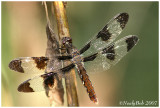 DragonFly August 22 *