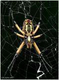 Spider September 3 *