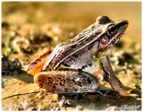 Frog Setember 6 *