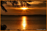 Darbone SunSet September 8 *