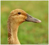 Duck September 19 *