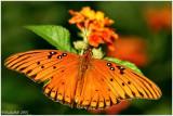 Butterfly September 28 *