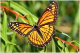 Butterfly September 29 *