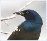 Oiseaux et neige d'avril