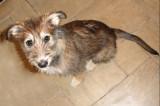 Puppy....Inka.
