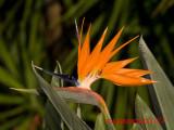 Florida Botanical Garden & Heritage Village Revisited 4/15/07