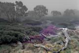 Mist on the Meadows