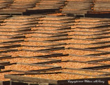 Cut Cots Drying in the Sun