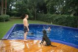 Time to play with the dogs in the swimming pool!