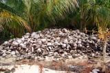A few coconuts!