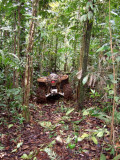 Inside quite thick Jungle...