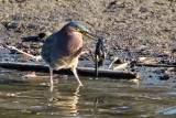 Grean Heron with Yellow-rumped Warbler