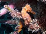 Las fotos submarinas