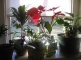 sarah's window after christmas