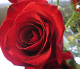 roses from my sweetie2