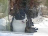 weird  yawning jasmine window reflection