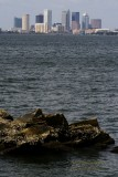 Downtown Tampa from Ballast Point Pier