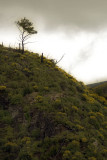 Result of Forest Fires on Samos Island
