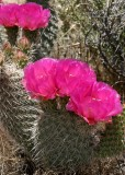 Glen Canyon Flowers #2