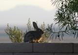 Wall Bunny
