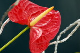 flower-30.jpg