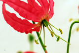 flower-31.jpg