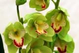 flower-32.jpg