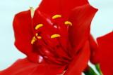 flower-35.jpg
