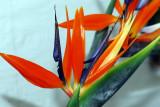 flower-36.jpg