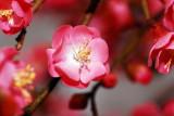 flower-37.jpg