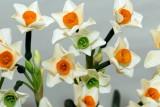 flower-39.jpg