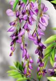 flower-40.jpg