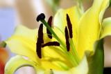 flower-42.jpg