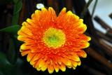 flower-43.jpg