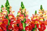 flower-45.jpg