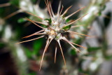 flower-48.jpg
