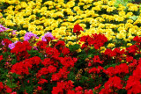 flower-56.jpg