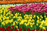 flower-57.jpg