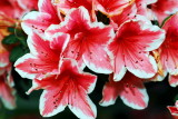flower-66.jpg