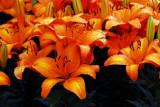flower-67.jpg