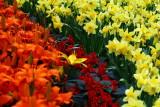 flower-88.jpg