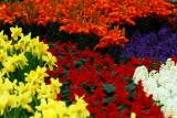 flower-89.jpg