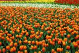 flower-93.jpg