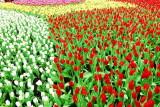 flower-99.jpg