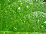 Green becomes greener when wet